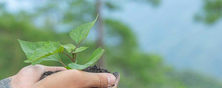 hands of trees growing seedlings.